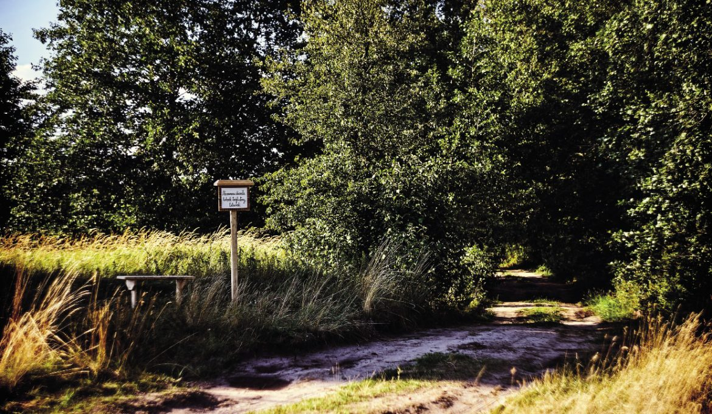 Galeria Natura: Ofilozofowaniu wogródku