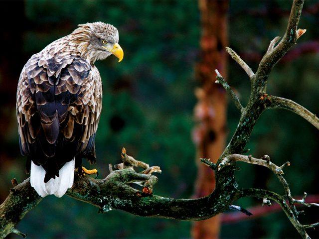 Ptasie pasje wsporcie isztuce