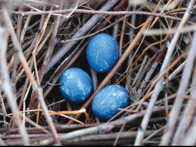 Dookoła jaja